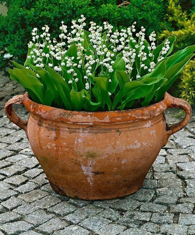 13 Brilliant Flower Pots Ideas For Your Garden 19