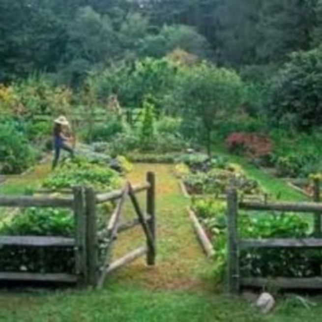 15 Wonderful Edible Plants Ideas To Enhance Your Backyard Garden 05