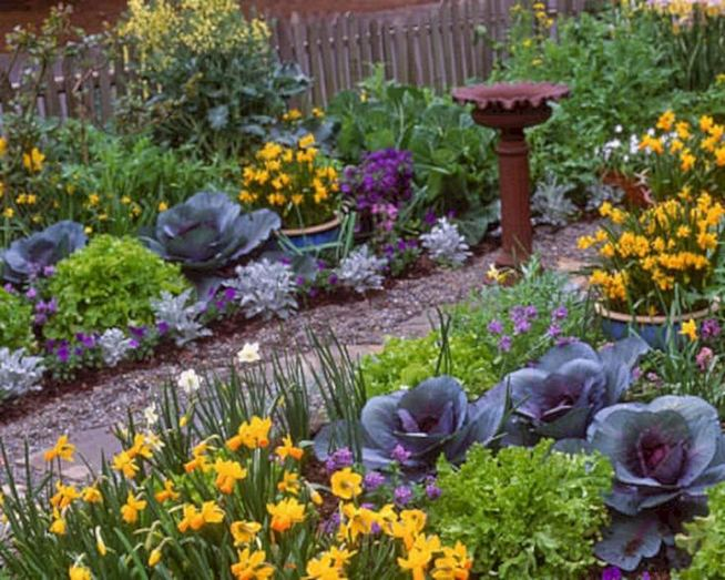 15 Wonderful Edible Plants Ideas To Enhance Your Backyard Garden 11