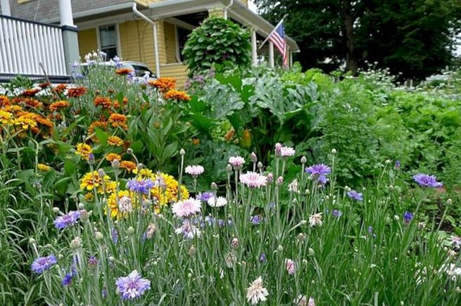 15 Wonderful Edible Plants Ideas To Enhance Your Backyard Garden 14