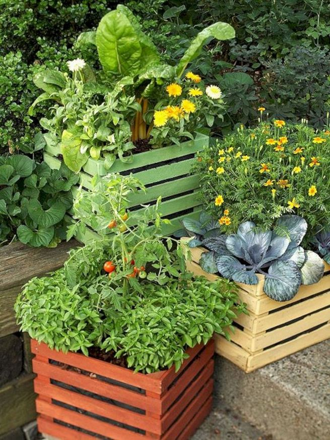15 Wonderful Edible Plants Ideas To Enhance Your Backyard Garden 21