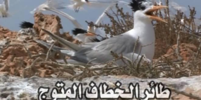 طائر الخرشنة (( الخطاف المتوج ))