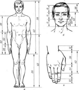 corpo umano fibonacci2