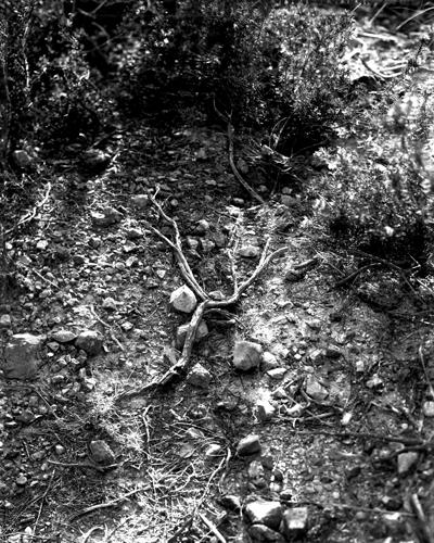 natura 2008