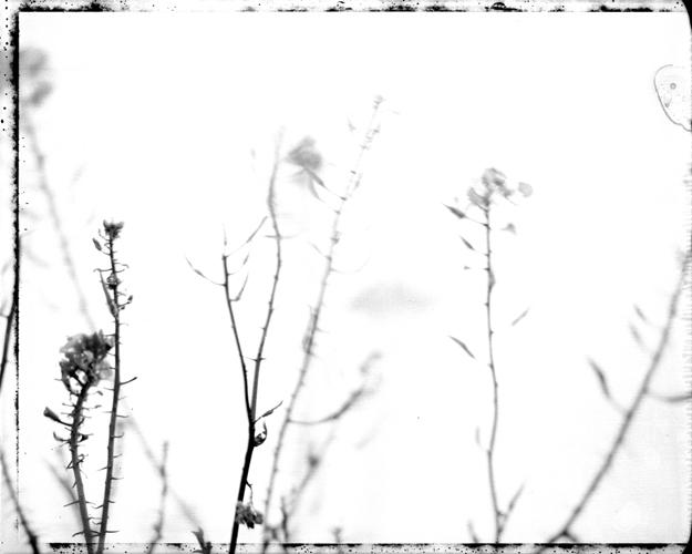 natura bianca