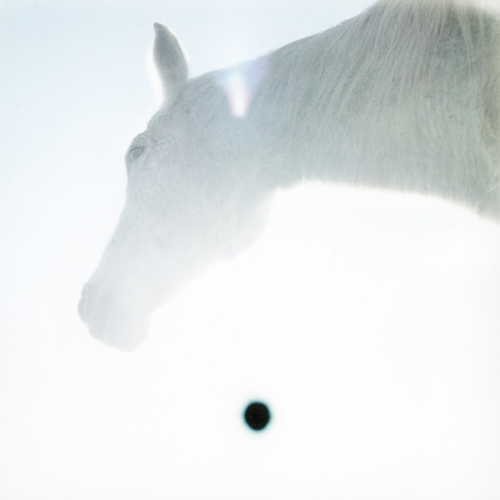 sole nero e cavallo bianco