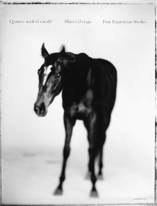 Quattro studi di cavalli