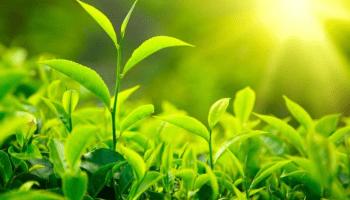 La vita delle piante