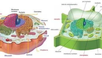 cellule-euc