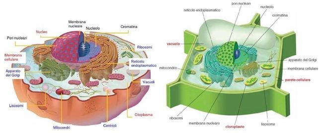 Cellula, lezione e questionario