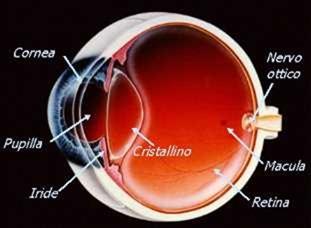 occhio_struttura