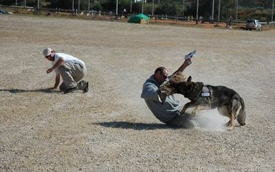 Dealing With Attack Dogs