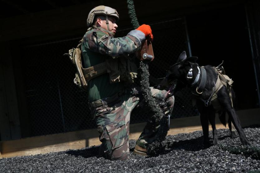 Loadout Room photo of the day | MARSOC Multi-Purpose Canine Handlers Train for the Unforseen
