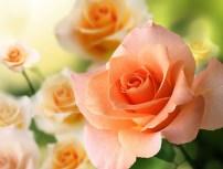 Flower-885085