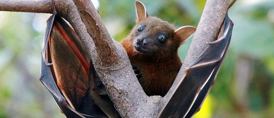 Come gli Zoo hanno salvato specie in via di estinzione