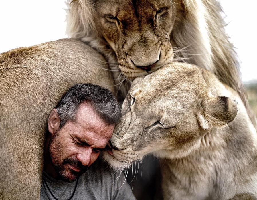 Quanto grande è un leoni Dick