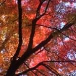 奈良の紅葉〜♬