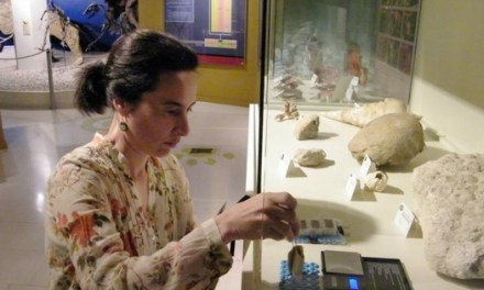 El Museo Paleontológico de Elche es pionero en testar un nuevo sensor de humedad elaborado con colágeno