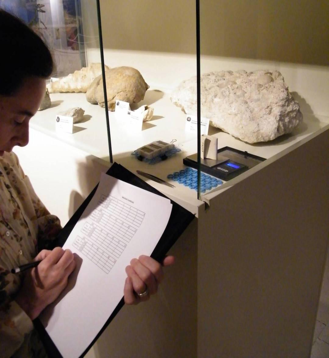 Museu Paleontològic d'Elx - Foto: MUPE