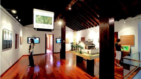 L'Ajuntament d'Elx invertirà prop de 10.000 euros en la remodelació del Museu del Palmerar