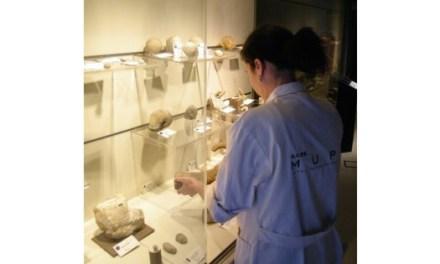 El Museo Paleontológico de Elche da un nuevo impulso a la conservación de sus colecciones