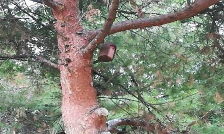 Se Instalan 4 Cajas Nido para Aves Insectívoras en las cercanías del Rio Montnegre