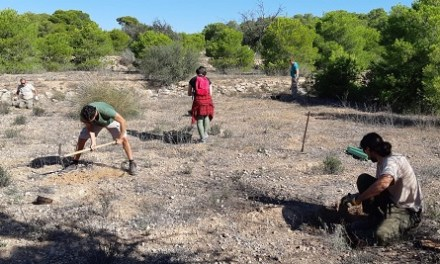 El Ayuntamiento de Elche y Conselleria colaboran en la introducción de especies de flora catalogada en el Clot de Galvany