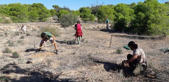 L'Ajuntament d'Elx i Conselleria col·laboren en la introducció d'espècies de flora catalogada en el Clot de Galvany