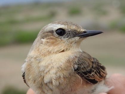 La Universitat d'Alacant se suma a la celebració del Dia dels Ocells a l'illa de Tabarca