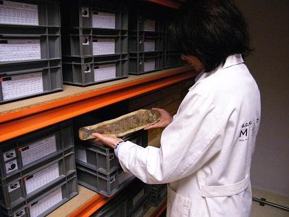 La Diputació d'Alacant dóna suport al Museu Paleontològic d'Elx en la conservació del seu patrimoni