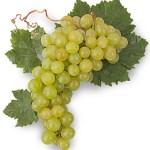 La uva moscatel será el ingrediente clave en la próxima showcooking de Bruno Ruiz en el Mercat Municipal de Dénia