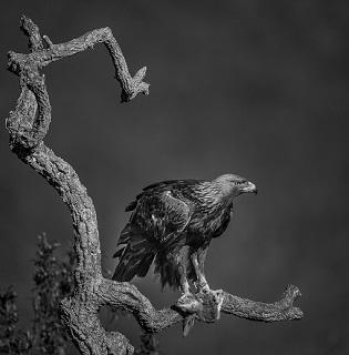 """El Museu de la Biodiversitat d'Ibi inaugura l'exposició fotogràfica """"Naturalesa en B&N, de tornada als orígens"""""""