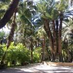 El Jardín Artístico Huerto del Cura de Elche abre sus puertas el próximo 3 de julio
