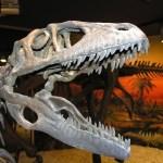 Las visitas al Museo Paleontológico de Elche tras su reapertura en junio se incrementan un 71% entre semana