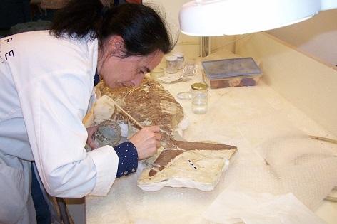El 'Proyecto Ictio' del Museo Paleontológico de Elche identifica en Lorca un pez fósil del mioceno superior