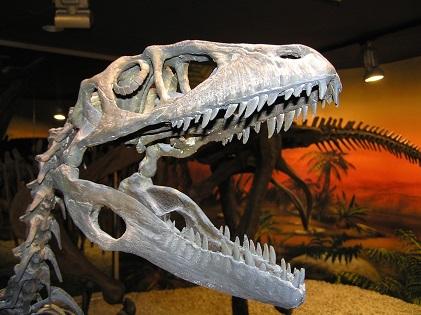 El Museo Paleontológico de Elche consigue el distintivo de establecimiento preparado ante la COVID-19