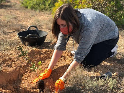 La concejalía de Medio Ambiente de Elche impulsa nuevas jornadas de revegetación del Clot de Galvany los domingos de este mes