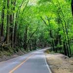Loboc bilar man made forest bohol philippines tourist attraction 0002