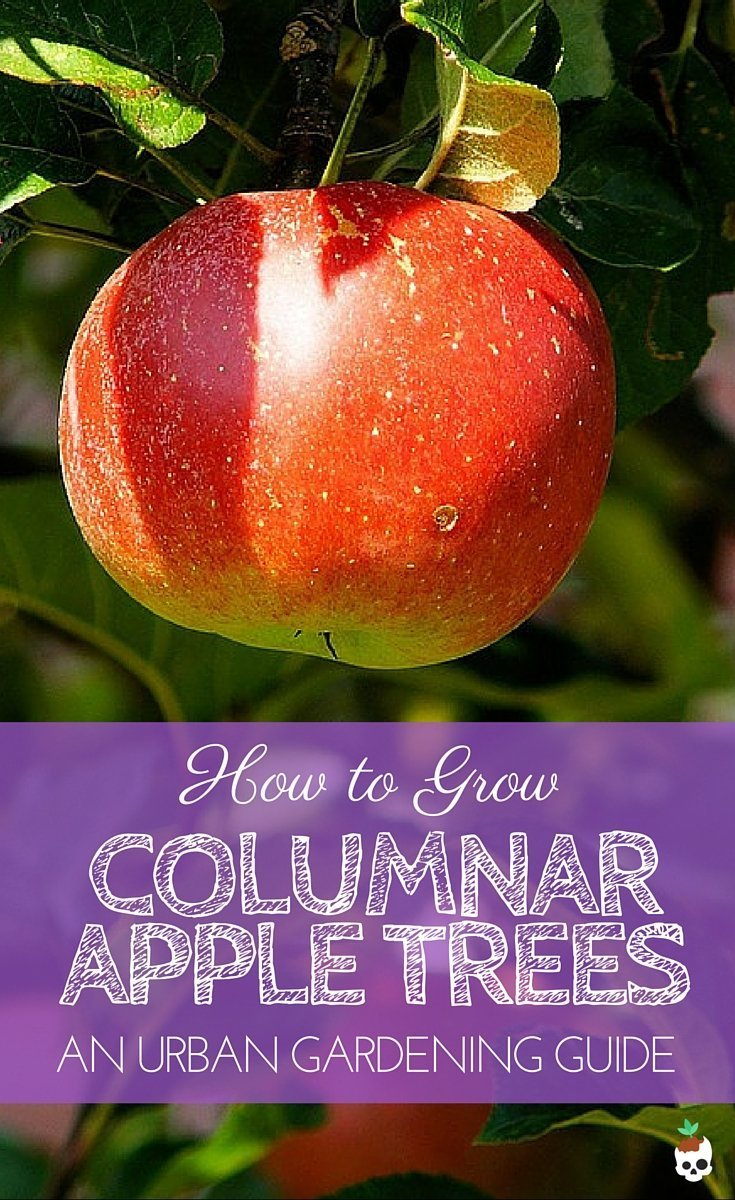 How To Grow Apples In Containers Small Spaces