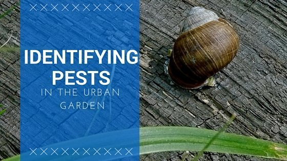 Identifying Pests In The Urban Garden