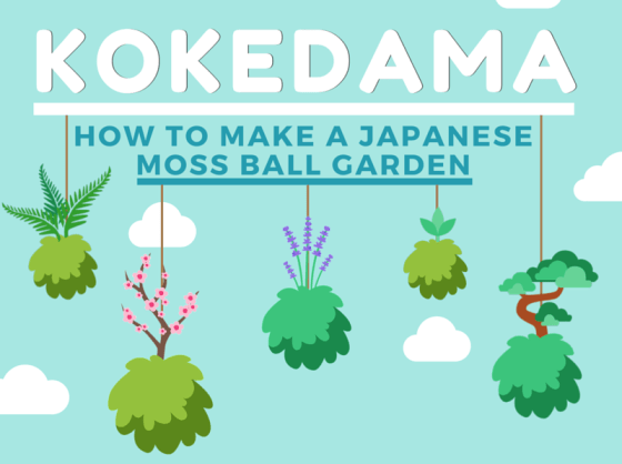 DIY Kokedama Japanese Moss Ball Infographic