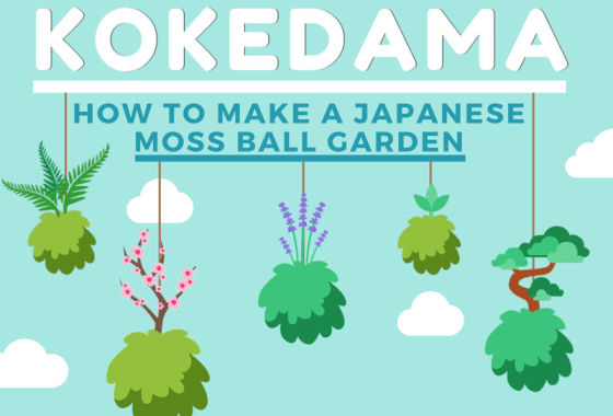 Kokedama: How To Make A Japanese Moss Ball Garden [Infographic]