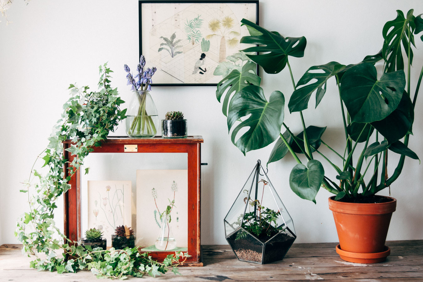 URBAN JUNGLE BLOGGERS MARCH  PLANTS  GLASS  Lobster and