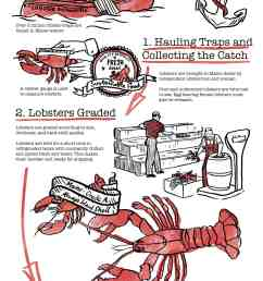 how lobsters are shipped [ 1720 x 4267 Pixel ]