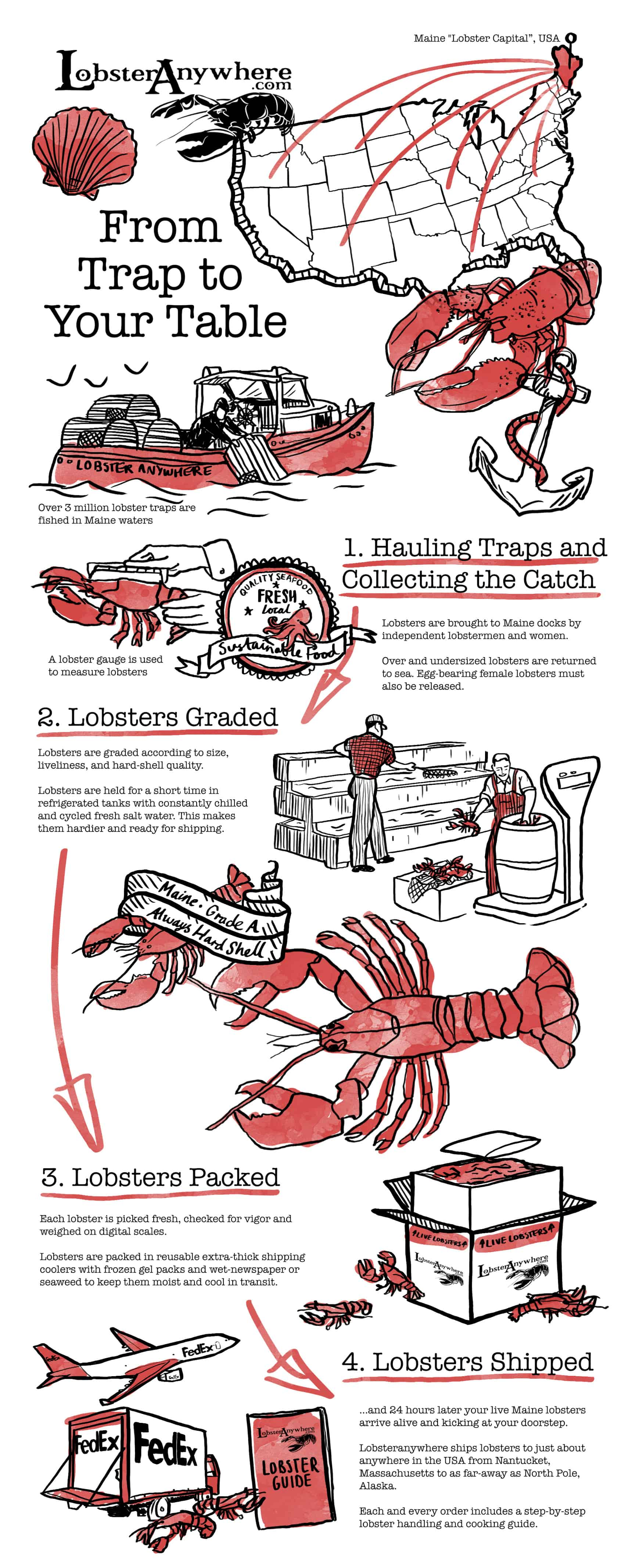 hight resolution of how lobsters are shipped