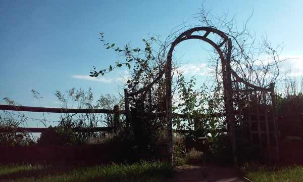Colorado garden bursting heart