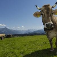 LandLiebe - Milch vom Bauern ♡
