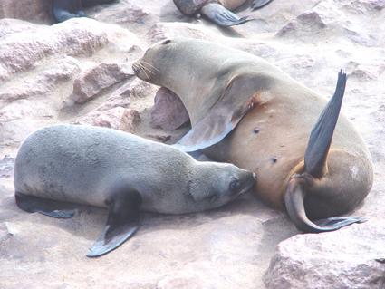 leoa marinho e filhote