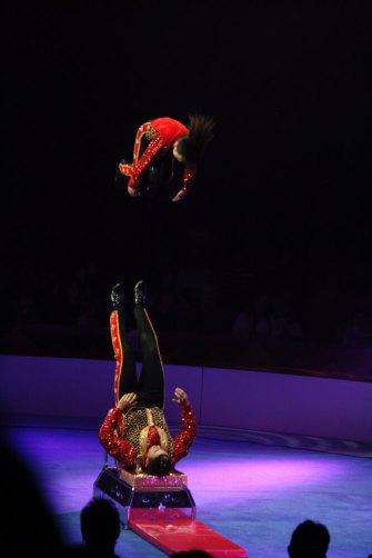 festival circ girona elefant dor 3