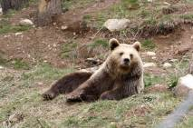 parc animalier angles oso
